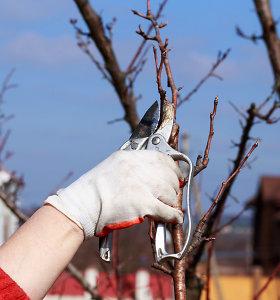 Paslaugos.lt: Rekordiškai šilta žiema ankstina sodininkų darbus: ką sode ir darže nuveikti galima vasarį ir kovą?