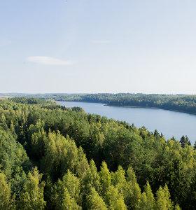 Seime vėl pritrūko balsų dar kartą priimti Miškų įstatymą