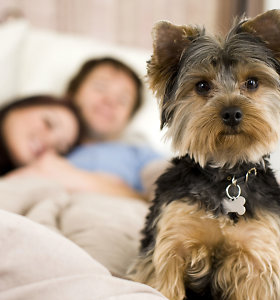 Gyvūnų globėjai stabdo dovanojimą prieš šventes