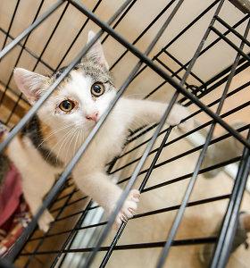 Skuodo rajone vyras užmušė ir užkasė du kačiukus