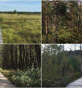 Unikalus grožis: 6 pėsčiųjų takai per Lietuvos pelkes