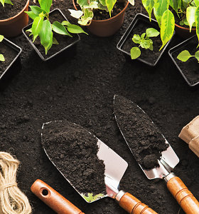 Botanikė įspėja apie kambarinių augalų sukeliamą pavojų sveikatai: gali nudeginti ir apakinti