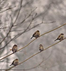 Gausiai iškritęs pirmasis sniegas priminė apie pagalbą sparnuočiams