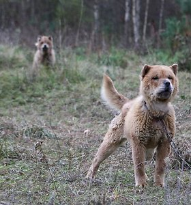 Liūdnai pagarsėjusios šunų koncentracijos stovyklos Trakuose kaliniai pagaliau išlaisvinti (nuotraukos, video)
