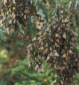 Pasaulio kampeliai, kuriuose galima stebėti margaspalvius drugelius