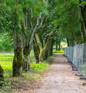 Trakų Vokės dvaro parkas laukia pokyčių: specialistai vertino, ar medžiai saugūs