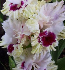 Daivos Macijauskaitės gėlių ūkis