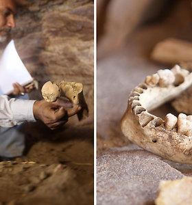 Archeologus nuliūdino lobių ieškotojų nusikaltimas: rasti apgadinti 3 tūkst. m. senumo Senovės žmogaus palaikai