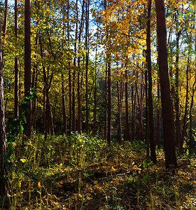 Seimas leido keisti miško žemės paskirtį kuriant valstybei svarbius objektus