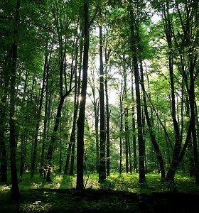 Lenkijos ministras: Belovežo miškas neturėtų būti įtrauktas į UNESCO sąrašą