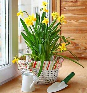 Tinklaraštininkė pataria: kaip nebrangiai atnaujinti namus ir sukurti pavasarinę nuotaiką