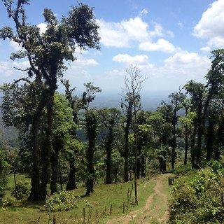 Madidi nacionalinis parkas