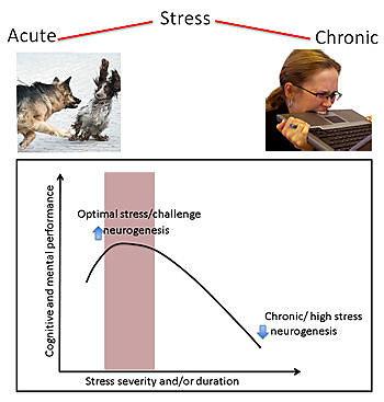 T.Alčausko iliustr./Pav. 1: Protinės veiklos produktyvumo priklausomybė nuo streso trukmės