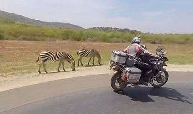 Asm.archyvo nuotr./Laukiniai zebrai, Kenija
