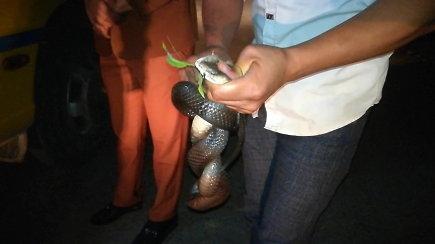 Vietnamiečiai sugavo kelyje pastebėtą gyvatę