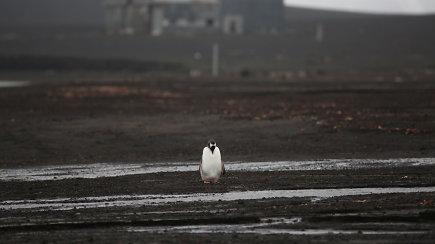 Mokslininkai šiurpsta dėl klimato atšilimo padarinių: Antarktidoje nutirpo sniegas