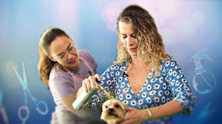 """""""Kaip ten dirba"""": augintinių SPA salone keturkojus meistrės puošia ir tatuiruotėmis, ir blizgučiais"""