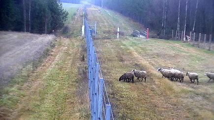 Nufilmuota, kaip 8 avys Švenčionyse kertą sieną į Baltarusiją