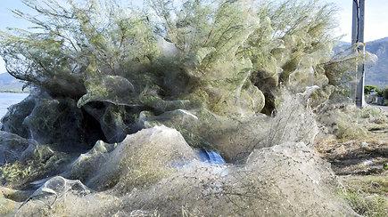 Graikijos pakrantės miestą okupavo tūkstančiai vorų
