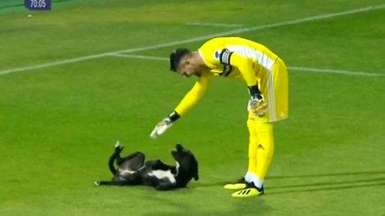 Futbolo rungtynes pertraukė aikštėje netikėtai pasirodęs išdykęs keturkojis žaidėjas