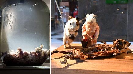 Pabandykite nežiaukčioti: šlykštaus maisto muziejaus lankytojai nesusilaiko neapsivėmę