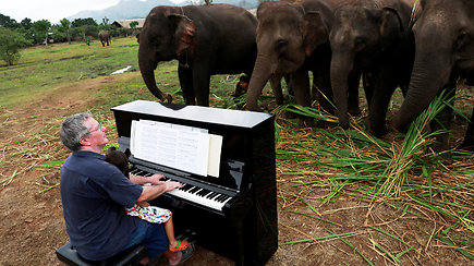 Sužeistiems drambliams taikoma nepaprasta terapija: britas juos ramina grodamas pianinu