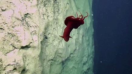 Vandenyno gelmėse – itin reta staigmena mokslininkams: vaizdas atrodė lyg iš kito pasaulio