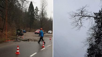 Verkių parke nufilmuota, kaip genėjami medžiai