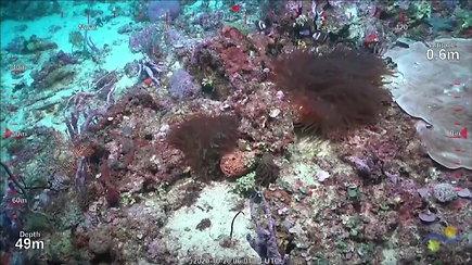 Netikėtas atradimas: mokslininkai aptiko net už dangoraižį aukštesnį koralinį rifą