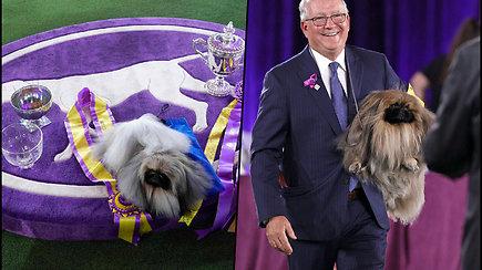 Prestižinės Vestminsterio šunų parodoslaimėtojas – šuo Vasabis: jis užburia publiką