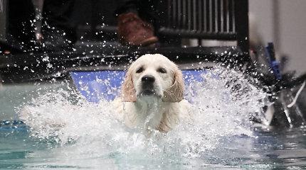 Pasaulinės šunų parodos Leipcige akimirkos
