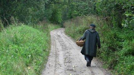 74 metų šiaulietis pasiklydo išėjęs grybauti: pernakvoti senoliui pavyko medyje