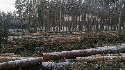 Labanore kertamus medžius užfiksavęs vyras piktinasi, kad miško nebėra, bet miškininkai primena – kaita turi būti