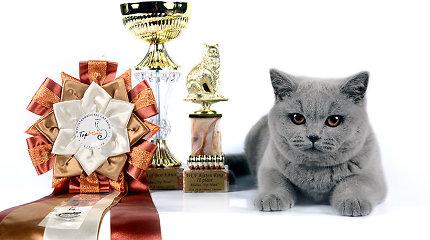 """Vilniuje vyks tarptautinė kačių paroda """"Top Miau"""""""