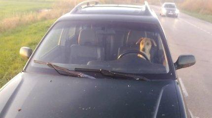 """Policijos """"Facebook"""" vaizdelis: Klaipėdos rajone reido žvaigžde tapo girto """"Subaru"""" vairuotojo šuo"""