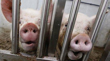 Afrikinis kiaulių maras persekioja buvusiam premjerui Adolfui Šleževičiui priklausiusį kompleksą Jonavoje