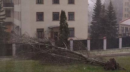 Lietuvą toliau talžo vėjas, Vilniuje medis užvirto ant Rusijos ambasados tvoros