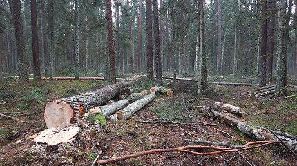 Seimo komitetas dega žalią šviesą 1500 hektarų miško ploto ribai – galutinis sprendimas popiet