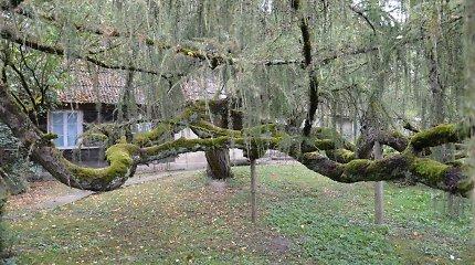 25 įspūdingiausi saugomi medžiai: visus aplankę gaus prizą