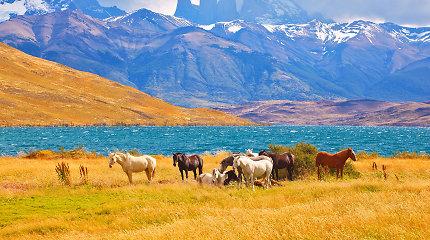 Nepaprasto grožio gamtos kūriniai Lotynų Amerikoje
