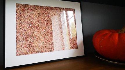"""Litų skutelius vilnietis laikė patalynės dėžėje, o dabar iš jų kuria paveikslus: """"Pas vieną žmogų ant sienos kabo apie 75 tūkst. litų"""""""