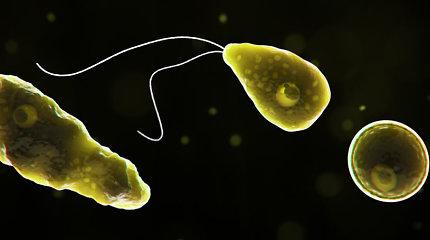 Smegenis ėdanti ameba: skamba kaip siaubo filmo ištrauka, bet egzistuoja realybėje