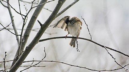 Besibaigiančios žiemos grožis Vytauto Šauklio nuotraukose