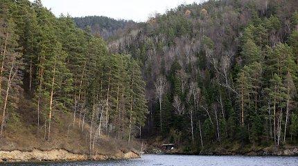Po kelių dešimtmečių Rusijos medkirčiams nebeliks ko kirsti – miškas baigiasi