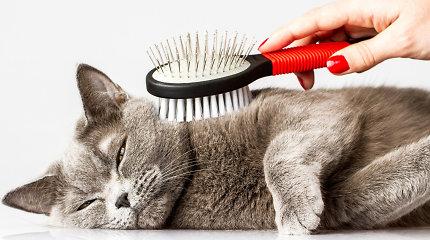 Kačių kailio priežiūra: kaip pratinti prie maudynių, kokias šukas rinktis ir kada kirpti nagus