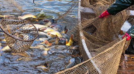 Nuo spalio 18 d. draudžiama limituota lašišų ir šlakių žvejyba