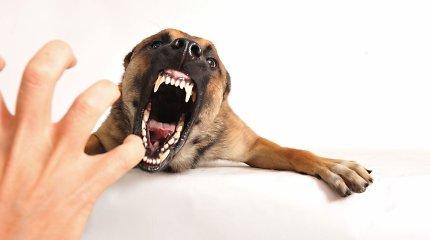 Faktoriai, lemiantys šunų agresiją: svarbi ne tik veislė, bet ir šeimininko patirtis