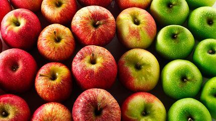 Obuolių nauda organizmui ir patarimai, kokiomis sąlygomis juos laikyti