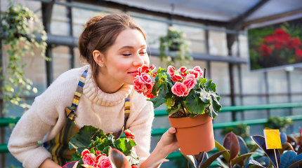 Kokias gėles sodinti šiuo metu ir kokių augalų žiedai džiugins visą vasarą? Specialistės komentaras