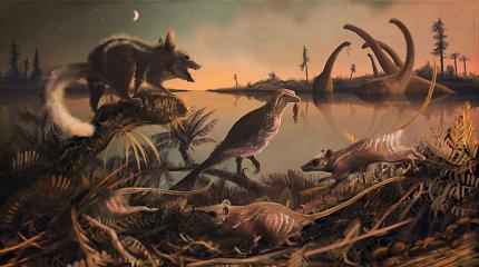 Britanijoje studentas rado prieš 145 mln. metų gyvenusių žinduolių dantų